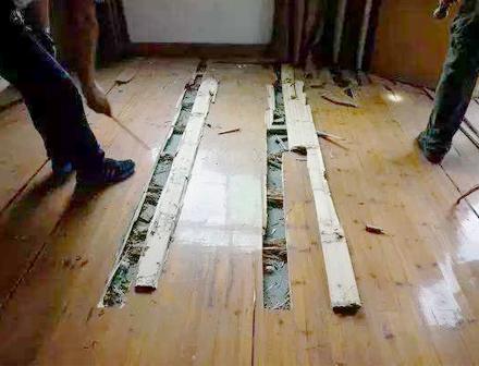 重慶家庭滅白蟻施工案例