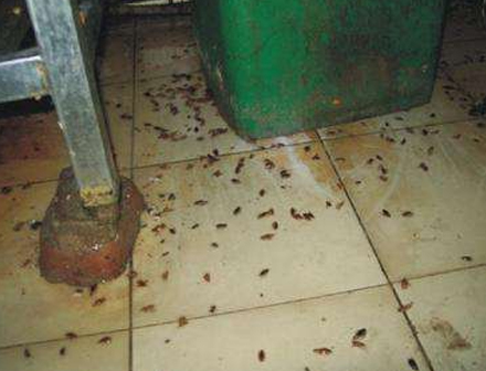 廚房滅蟑螂案例展示